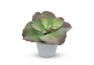 FLAP JACK - Succulent in Pot